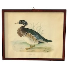 Antique Summer Duck Lithograph by Benjamin Fawcett