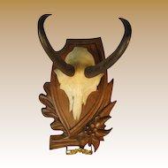 Black Forest Chamois Horn Trophy