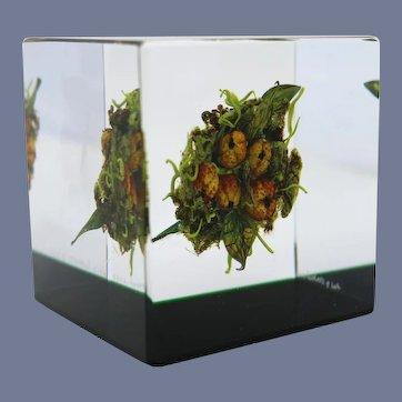 Beautiful PAUL STANKARD Lush BERRY CLUSTER Art Glass Paperweight Cube Sculpture
