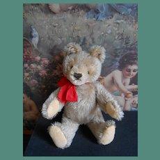 ***Little Teddy Steiff bear...Cute !!!***