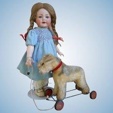 **Cute Fox Terrier dog on wheels***pull toy !