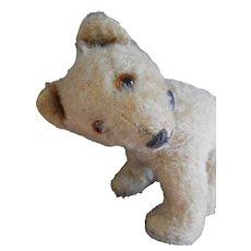 **I am a little STEIFF bear...and I am cute...!!!!!
