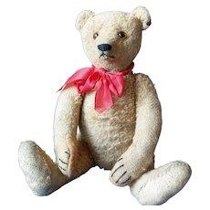 Great Vintage Steiff Teddy Bear 1920 - 1925