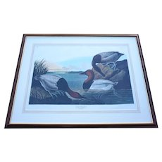 """John James Audubon """"Canvas backed Duck"""" by R.Havell"""