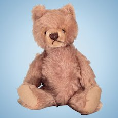 Very cute Tagged Steiff Teddy bear
