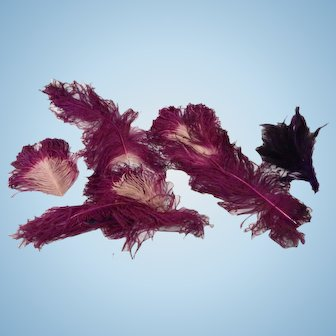 Lot of Antique Dyed Ostrich feather For your Doll