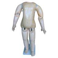 Steiner body 22 inches or 55 cm