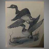 "Tony Biagi ""Wood Duck"" Lithograph (ART10075)"