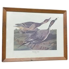 "30% Off Intro Special! Circa 1950 Audubon ""Pin-Tailed Duck"" print (ART10093)"