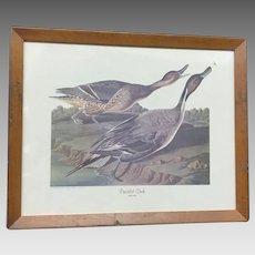 "Circa 1950 Audubon ""Pin-Tailed Duck"" print (ART10093)"