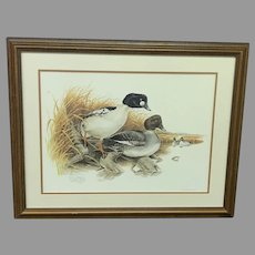 "Don Whitlatch Circa 1974 ""Common Goldeneye"" Numbered Lithograph (ART10119) on SALE Now"