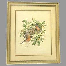 "Circa 1974 Don Whitlatch ""Robins"" Lithograph (ART10121)"