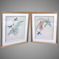 Vintage J. Gould, H.C. Richter by Hullmandel & Walton, Imp Hand Colored Humming Bird Lithographs Set of Two Circa 19th Century (ART10144)