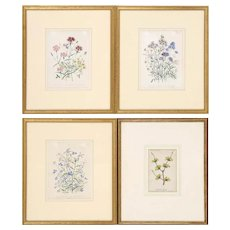 Set of Four Beautiful Antique Botanical Floral Illustration Lithographs Hand-Colored Framed in Gilt Wood