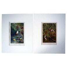 Pair Antique Louis Prang Chromolithographs, from Animate Creation