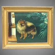 Vintage Oil on Canvas Pomeranian Portrait, 'Champion Starbright Princess Sonia', by Gilman Low 1924