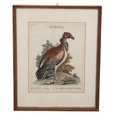 Rare 18th Century Copper Engraving of The King Vulture ( Sarcoramphus papa ) - George Edwards