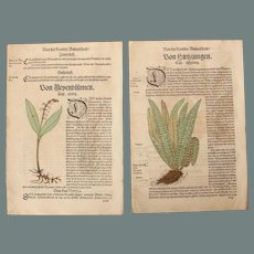 16th Century Renaissance Set of two Prints - Lily of the valley, Hart's-tongue fern and more - 1550's Botanical Woodcut (Hieronymus Bock)