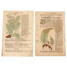 16th Century Renaissance Set of two Prints - Ferns - 1550's Botanical Woodcut (Hieronymus Bock)