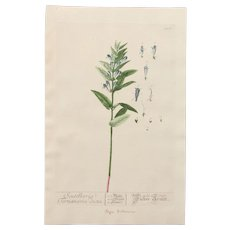 18th Century Floral Copper Engraving of Skullcap from the Herbarium of ELIZABETH BLACKWELL HANDCOLORED - Red Tag Sale Item