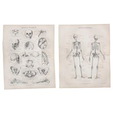 19th Century Set of two Prints of the Skeleton of the human being - 1878  Anatomic Steel Engraving