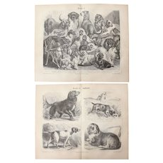 19th Century Set of two Prints of Dogs - 1876 Zoology Steel Engraving
