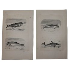 19th Century Set of two Prints of Dolphins and Whale - 1860's Zoology Steel Engraving