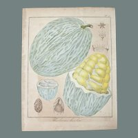 19th Century Floral Copper Engraving of Mocambo / Jaguar Tree Fruit by Friedrich Guimpel HANDCOLORED