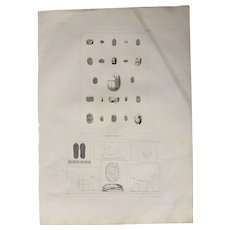 1802 Copper Engraving of Different Ancient Egyptian Antiquities including Scarabs and Reliefs from Napoleons Travels to Egypt (Vivant Denon) Page 972