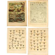 Art Nouveau Set of two Prints of Flies & Frogs - 1900's Polychrome Lithograph Insects & Amphibians