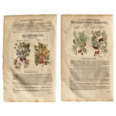 16th Century Renaissance Print of Plum, Dogwood & Service Tree - 1590's Botanical Woodcut