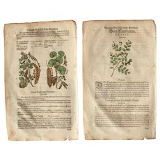 16th Century Renaissance Set of two Prints of Carob Tree, Wild Cherry &  Buckthorn  - 1590's Botanical Woodcut