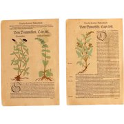 16th Century Renaissance Set of two Prints - Spinach, Adder's-tongue, Prunella & a Blue Bugle  - 1550's Botanical Woodcut (Hieronymus Bock)