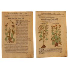 16th Century Renaissance Set of two Prints - Gentian, Buttercup, Anemone - 1550's Botanical Woodcut (Hieronymus Bock)