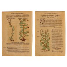 16th Century Renaissance Set of two Prints - Pepperwort & Water Pepper- 1550's Botanical Woodcut (Hieronymus Bock)