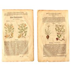 16th Century Renaissance Set of two Prints of Senna & Figwort - 1590's Botanical Woodcut