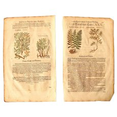 16th Century Renaissance Set of two Prints of Fern & Colutea - 1590's Botanical Woodcut