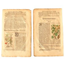 16th Century Renaissance Set of two Prints of Bittersweet Nightshade, Bitter Apple & Wild Cucumber - 1590's Botanical Woodcut