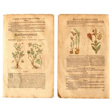 16th Century Renaissance Set of two Prints of Alpine Avens, Water Avens, Cortusa, Indian shot & Gladiolus- 1590's Botanical Woodcut