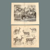 19th Century Set of two Prints of Horses, Pony & Deer- 1870's Zoology Steel Engraving