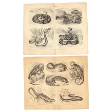 19th Century Set of two Prints of Snakes and Lizards- 1870's Zoology Steel Engraving