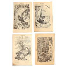 19th Century Set of four Prints of animals including Moose, Chimpanzee, Bird-of-paradise & Turtle - 1870's Zoology Steel Engraving