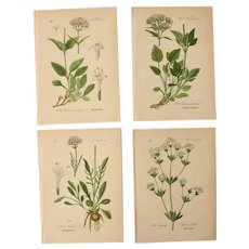 19th Century Set of 4 Floral Lithographs - 1880's Botanical Prints