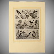 1850's Original Antique Steel Engravings - Birds