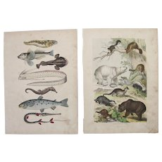 1840's Set of two Animal Engravings of Mammals and Fish / Print of Fauna