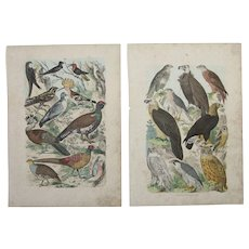 1840's Set of 2 Animal Engravings of Birds / Print of Fauna