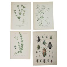 19th Century Set of 4 Floral & Zoological Prints - Lithographs & Engraving