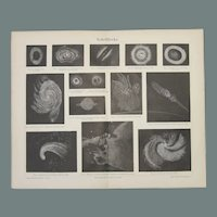 19th Century Northern Map of the Stars - 1870's Steel Engraving