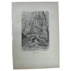 19th Century Print of Birds - Eurasian woodcock - 1881 Zoology Steel Engraving