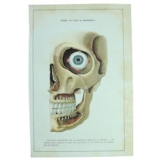 "Art Nouveau Print of the Human Skull ""Orbit of the eye and jaws"" -  1907 Polychrome Lithograph"